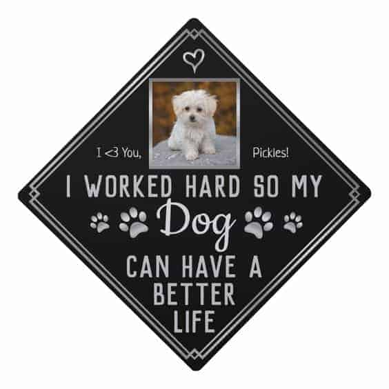 dog graduation cap