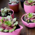 Various succulents in pink clay pots resting on top of a wooden surface.