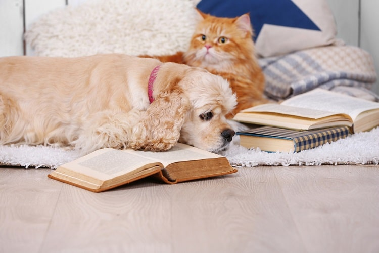 A dog and a cat with a pile of textbooks lying on the bed.